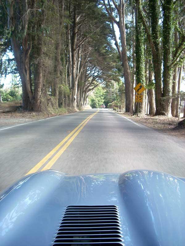 canopy of coastal trees along CA 1 in Mendocino County.