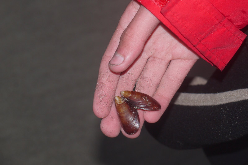 Nick found this red mussel shell.