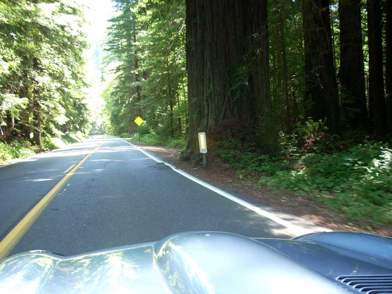 In the Redwoods.