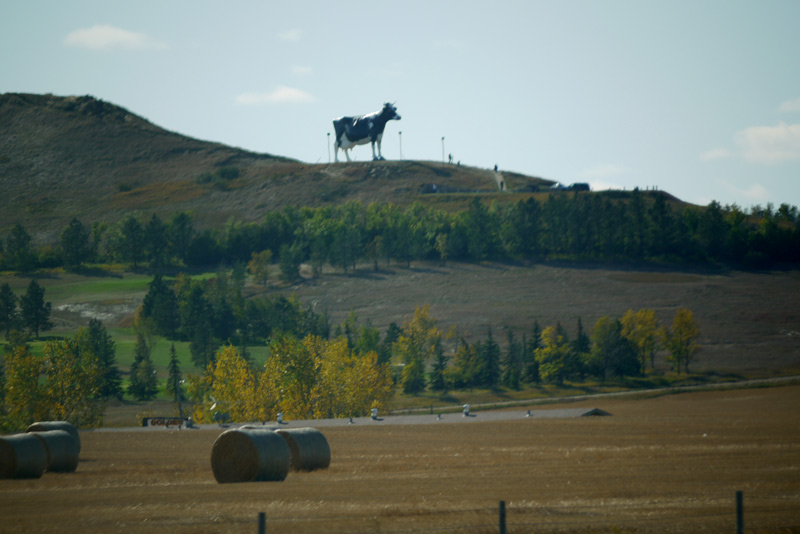Above: A giant Cow.