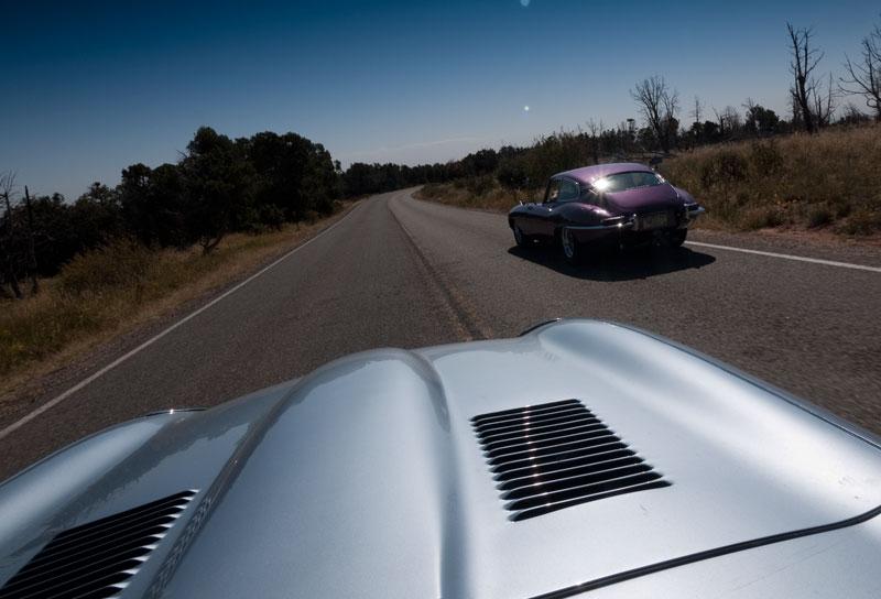 Passing Tweety on the road in Mesa Verde